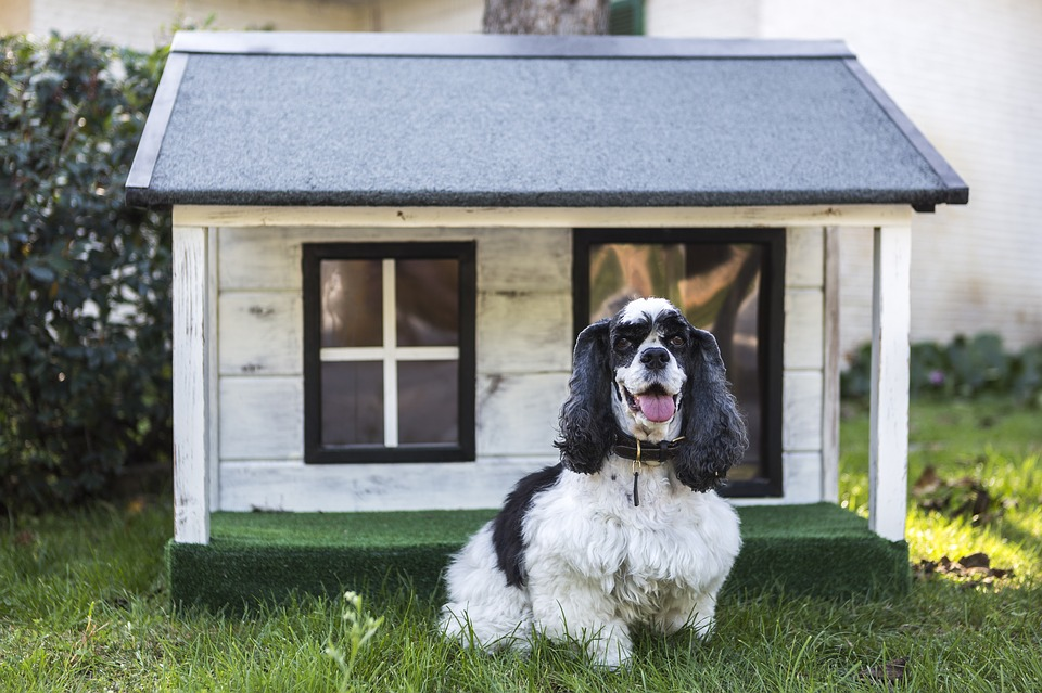 Things You Need to Know before Buying a Heated Doghouse