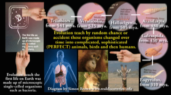 Where is the EVIDENCE proving EVOLUTION?