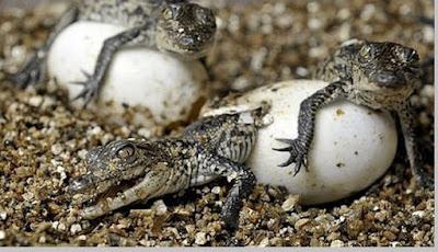 Perkembangbiakan hewan secara ovovivipar - pustakapengetahuan.com