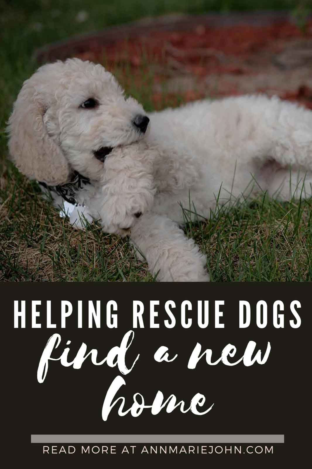 Simple And Effective Tips In Helping Rescue Dogs Find A New Home