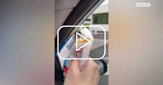 An Australian woman feeds a hungry parrot from a hash brown potato until a surprise occurred and many birds met around her car #TVNow # Everyone_ Responsible # About the World
