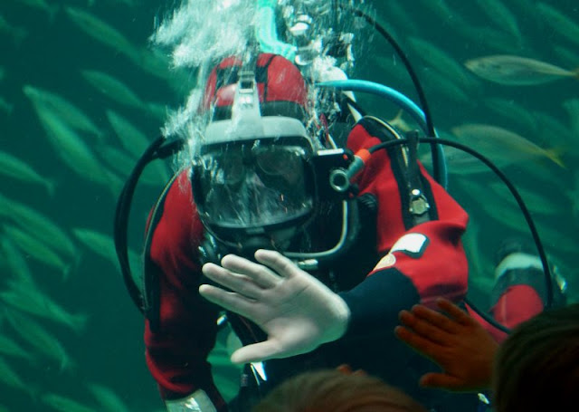 Das Nordsee-Ozeanarium in Hirtshals: Ein tolles Ausflugsziel für Familien in Nord-Jütland. Während unseres Dänemark-Urlaubs haben wir mit unseren Kindern das Nordsee-Ozeanarium in Hirtshals besucht, das größte Aquarium nicht nur in Nord-Jütland, sondern in Nord-Europa. Auf Küstenkidsunterwegs stelle ich Euch dieses tolle Ausflugsziel näher vor und zeige Euch, was Ihr unbedingt gesehen haben müsst!