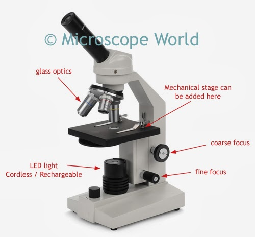 high school microscope image with features