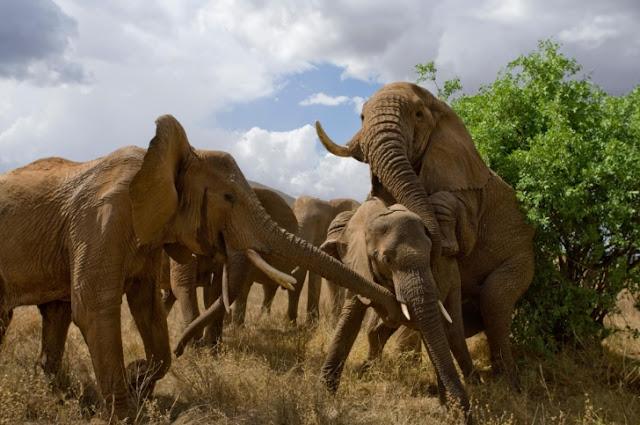 Animals Mammals, Elephants,