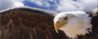 7 LEADERSHIP PRINCIPLES to learn from an eagle