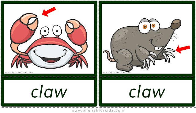 Claw (crab, mole) - printable animal body parts flashcards for English learners