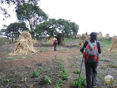 Parcelas con milpa cosechada en Cerro Viejo