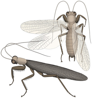 Restoration of Santanmantis axelrodi based on the author's recent work and newly discovered details