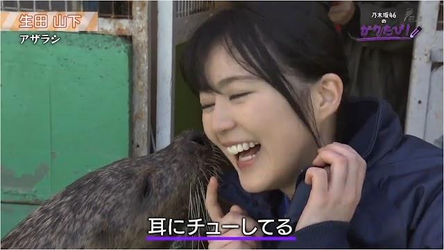 Nogizaka46 No Gaku Tabi Episode 4 (Chiba) (Yoda Yuuki, Ikuta Erika, Yamashita, Takyama, Dll)