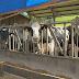 Forte calor traz prejuízos para produtores rurais no Oeste de SC