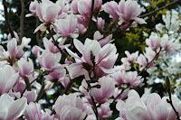 http://fineartfotografie.blogspot.de/2013/06/magnolie.html