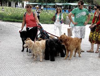 Condutora de Cachorro na Plaza Recoleta, em Buenos Aires