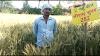 श्रीराम सुपर 252 और 303 गेहूँ बीज से मध्य प्रदेश  के किसानों की गेहूँ उत्पादकता बढ़ी