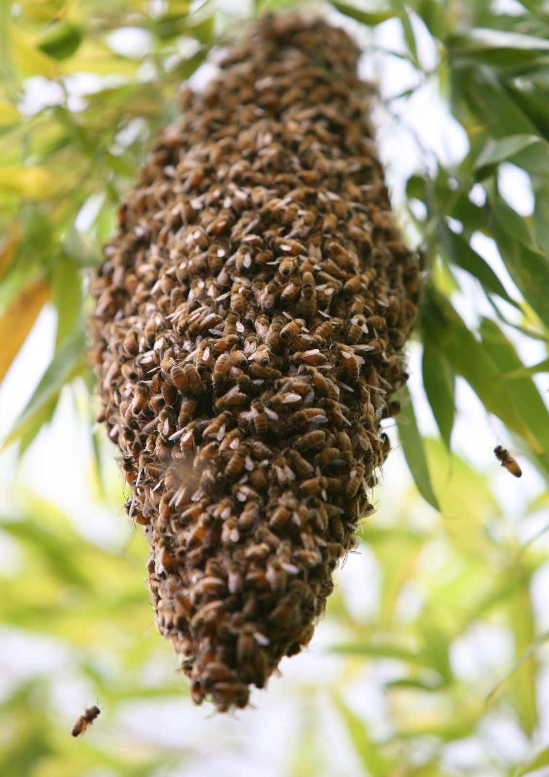 DIRECTORATE OF BEE-KEEPING : December 2012 - photo#24
