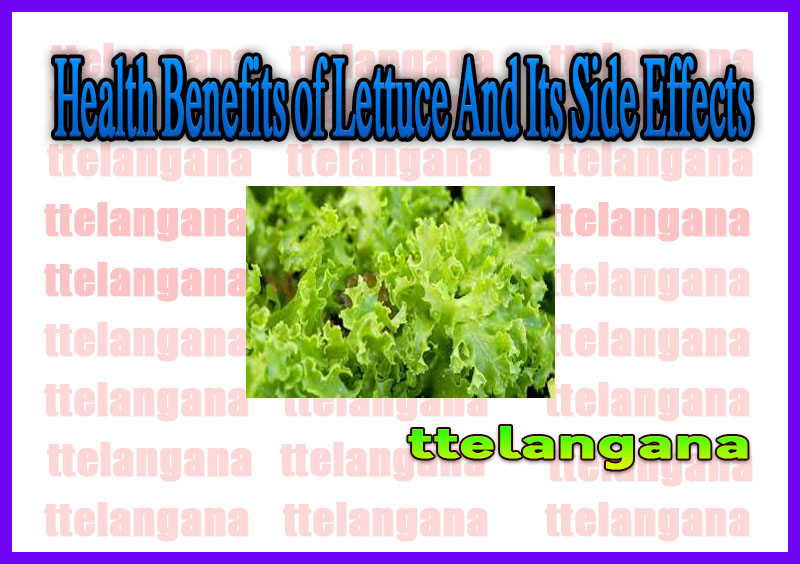 Health Benefits of Lettuce And Its Side Effects