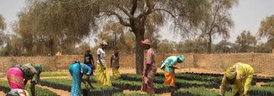 Nyanga South African Herbalists