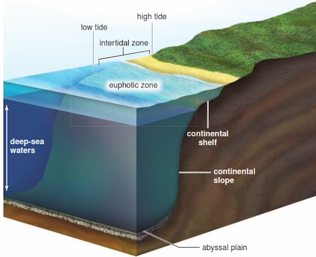 FIGURE 2 Ocean ecosystems. Organisms live in the well-lit waters of the euphotic zone and in the increasing darkness of the deep-sea waters of the pelagic zones (see Figure 3).