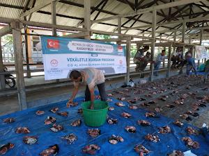 ACT Aceh - MRI Salurkan 50 Sapi Qurban untuk Area Banda Aceh dan Aceh Besar