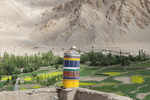 Rich agricultural land right below Chemrey monastery, Ladakh