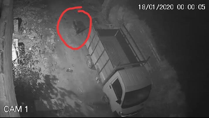 সিসিটিভিতে ধরা পড়ল বাঘ জাতীয় জন্তুর ছবি, জঙ্গলমহলের বাঘ আতঙ্কে গৃহবন্দী হুগলির গ্রাম 3