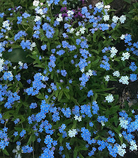 Forget-Me-Nots Quote