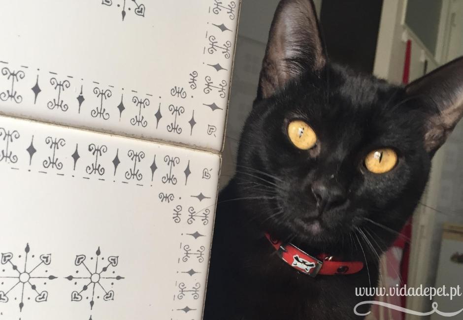 a história do gato preto + partilha de felinos + blogue português + portugal + animais de estimação + vida de pet + pedro e telma