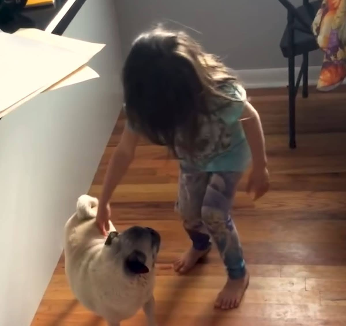 Best Pets of The Month: 2020年9月に癒やされた微笑ましい動物ビデオの総集編