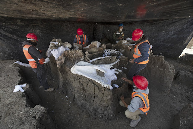 At least 200 mammoth skeletons found at Mexico City airport construction site
