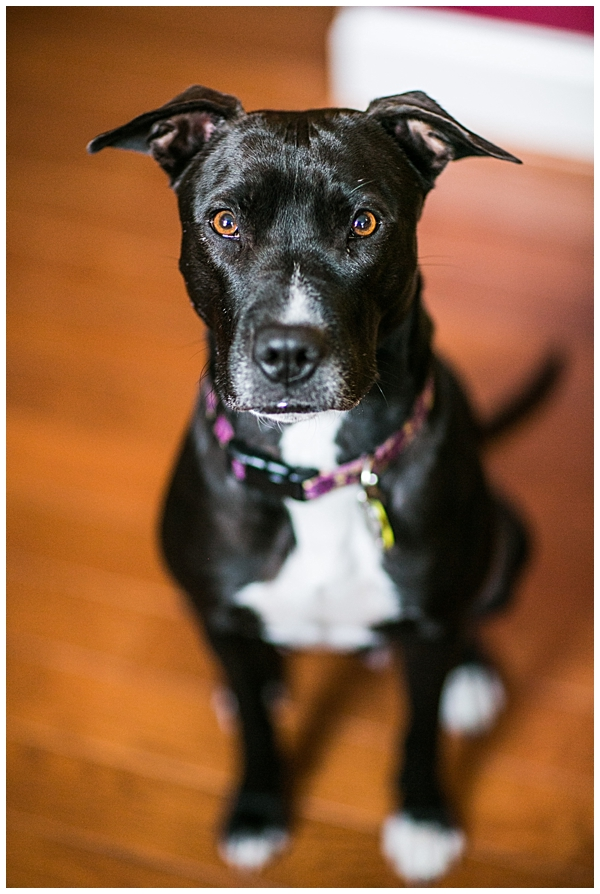 Baltimore pet photographer
