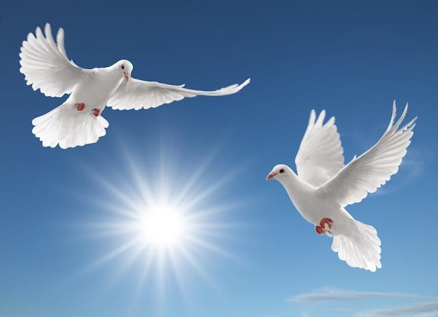 رسالة إلى دعاة السلام في العالمين الواقعي و الافتراضي .. سحر الحياة