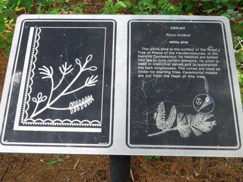 white pine interpretive sign Seneca Nation