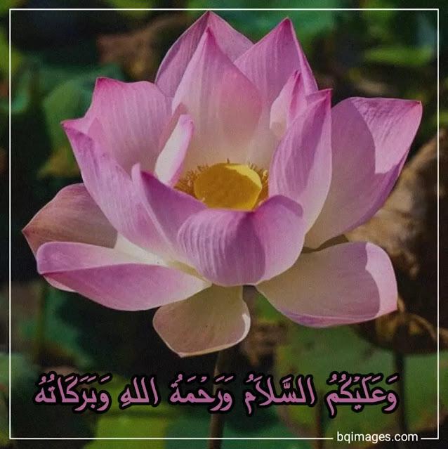walaikum salam arabic images