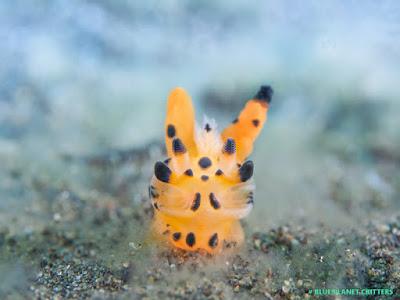 Underwater photography 水攝 Macro 微距 Scuba dive 潛水 em1mark2