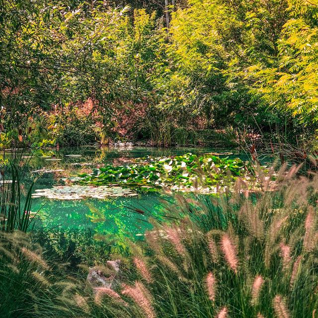 The New Blacck - Orléans - Blog - Chaumont sur Loire - Visite des jardins - eau truquoise nénuphars