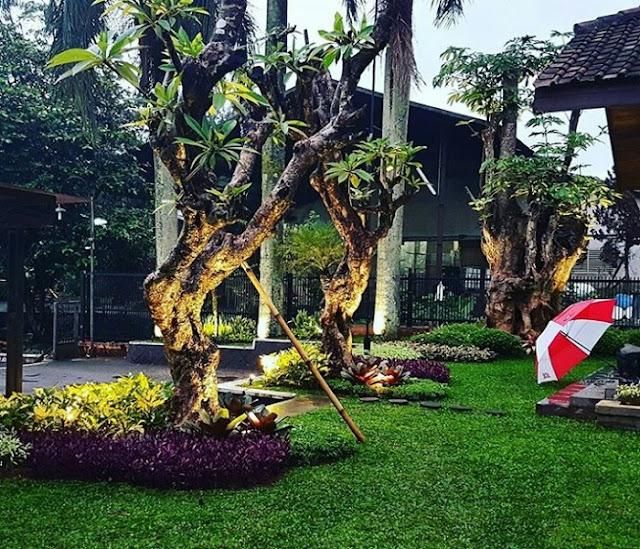 taman tropis. tukang taman surabaya