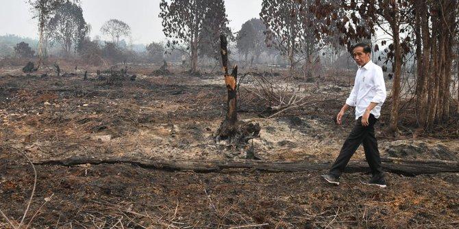Walhi: Jokowi Pulang, Riau Malah Semakin Sakit