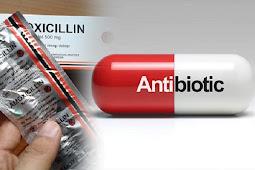 Manfaat Amoxicillin Untuk Ayam Aduan Agar Sehat