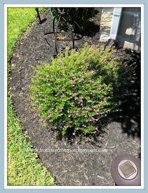 Front -Yard- Garden-DIY-Landscape-Mexican-Heather-From My Front Porch To Yours