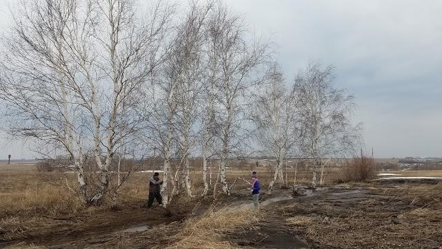 мгновения весны...март...деревня...озеро...выбрались за берёзовым соком