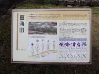 Japanese Iris garden has 84 varieties - Tokyo Imperial Gardens, Japan