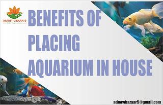 BENEFITS OF PLACING AQUARIUM IN HOUSE