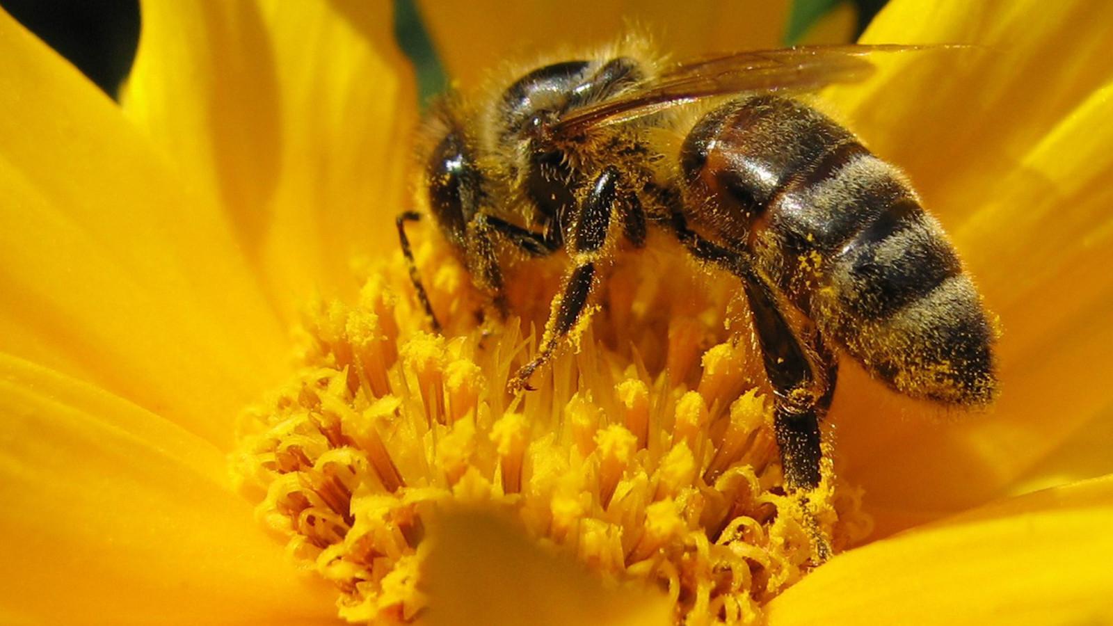 Resultado de imagen para apicultura hd