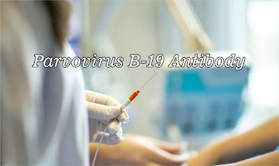 Parvovirus B-19 Antibody