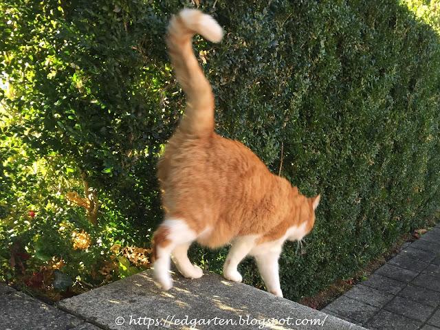 Katze als Mäusefänger