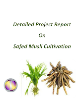Project Report on  Safed Musli Cultivation