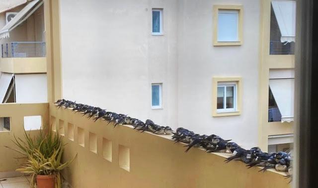 Ορνιθολογική Εταιρεία: Παρακαλούμε σεβαστείτε τα πουλιά - Μην τα πλησιάζετε και μην τα ενοχλείτε καθόλου!