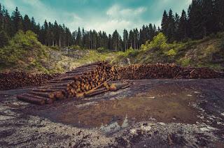 Penebangan Hutan Di Seluruh Penjuru Dunia