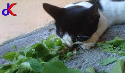 Kucing galak – Manfaatnya bagi kesehatan | Bagian 1