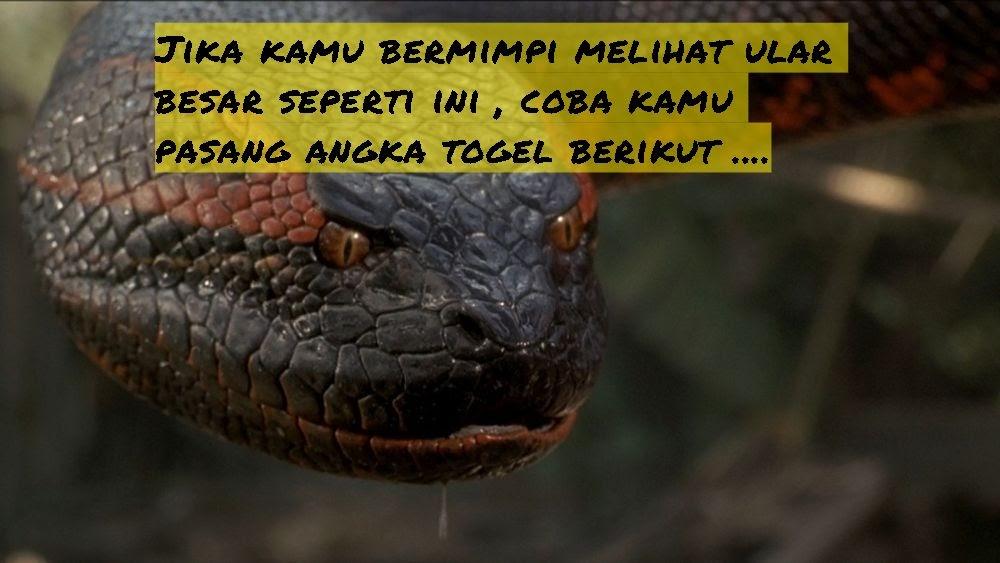 Mimpi ular makan orang togel