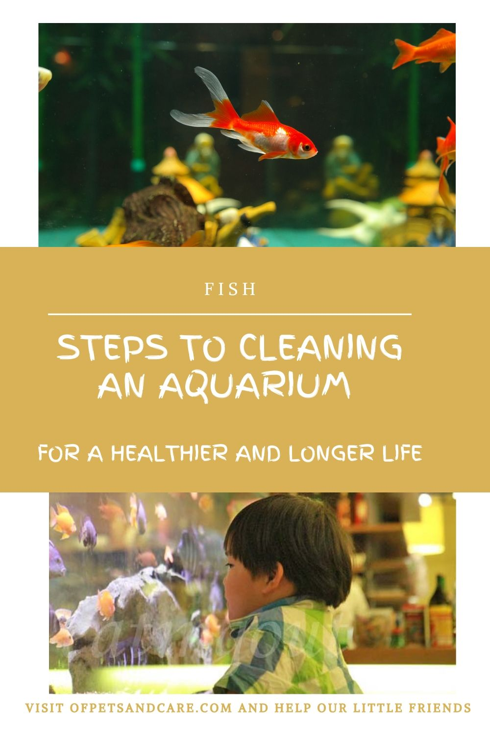 Steps to Cleaning an Aquarium for a Healthier and Longer Life,